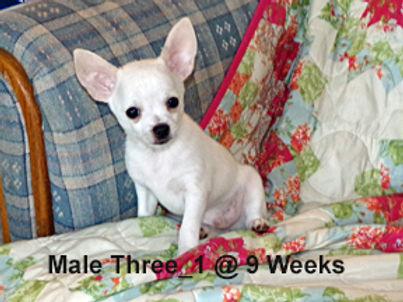Male Three_1.jpg