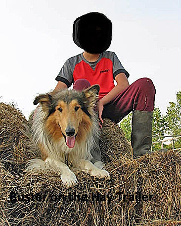 Buster on the Hay Trailer.jpg
