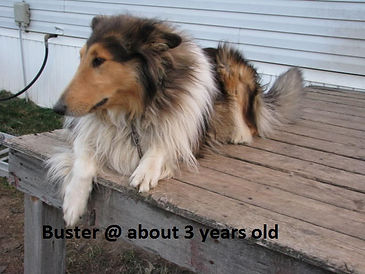 Buster @ about 3 Years Old.jpg