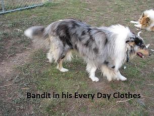 Bandit Playing.JPG