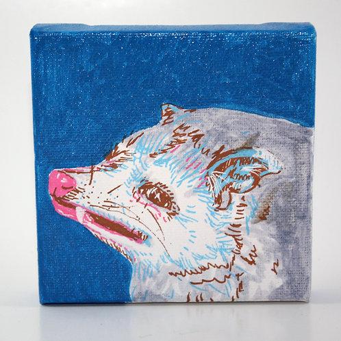 opossum (blue)