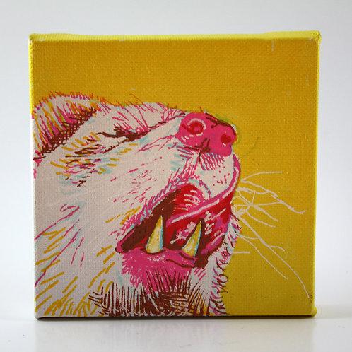 opossum (yellow)