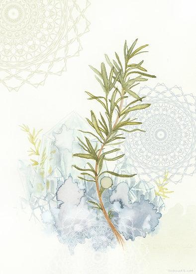 Herb Magic - Watercolor Print Set