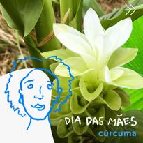 Dia das Mães | Florus | Carrossel 1