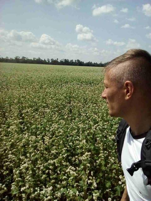 Un champ de coriandre en fleurs, à 100 mètres de nos ruches.