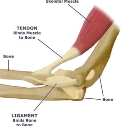 Muscle Ligament & Tendon Pain