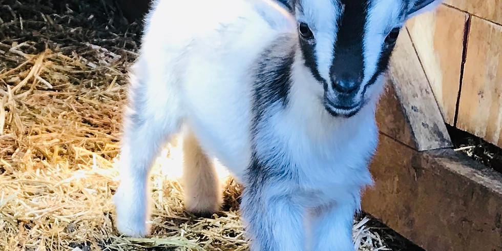 ISD 191 Community Ed-Goat Yoga with Jayme-6 PM