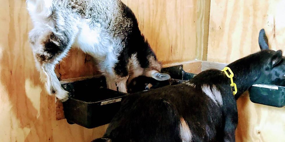 Goat Yoga with Kalli-6PM