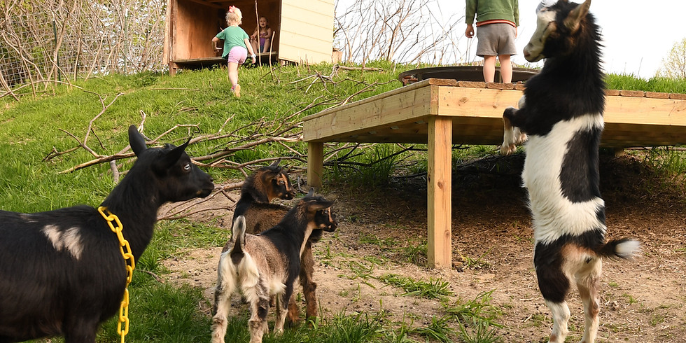 Goat Yoga with Tracey-9AM