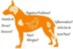 Honest Paws diagramnew.jpg