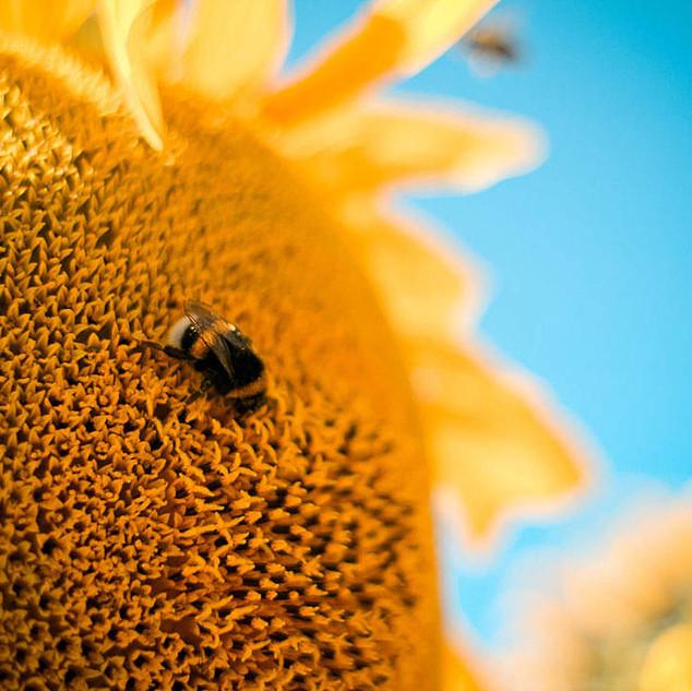 bumble-bee-1080x720.jpg
