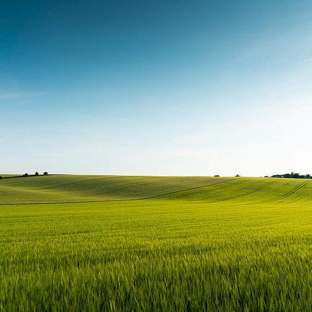 beautiful-green-field-scenery-1080x720.j