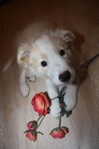 uschka met roos.JPG