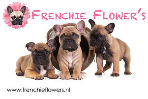 frenchie's flowers.jpg