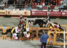 Joute équestre et historique, Chevalerie initiatique, Joute équestre et spectacles équestres en France