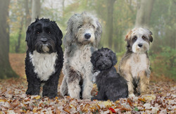 Clare Hulse lovely dogs