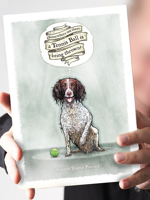 Ref 85: A Tennis Ball is being thrown! L&W spaniel