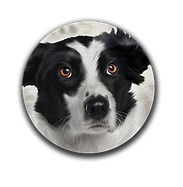 Pet Portraits of dogs, cats and horses