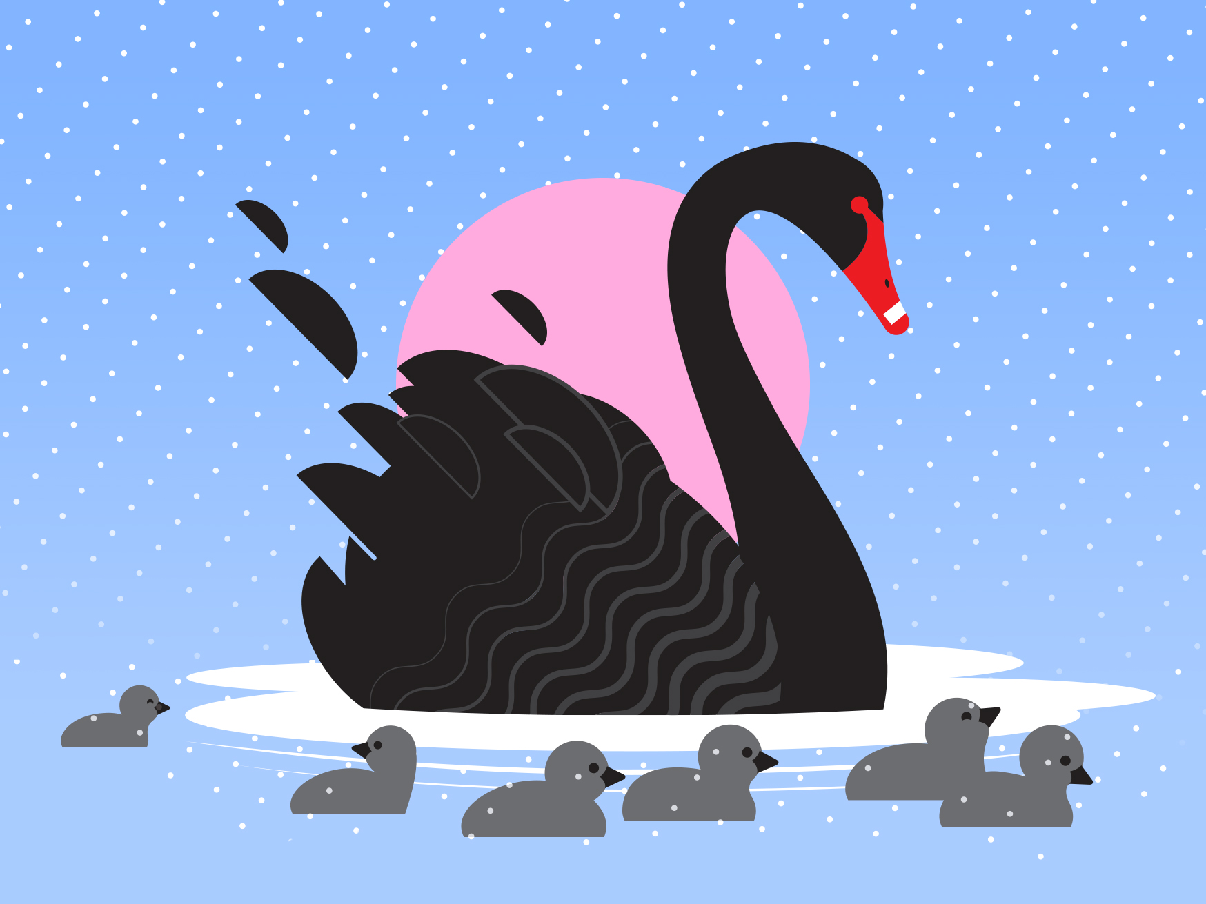 Seven swans swimming