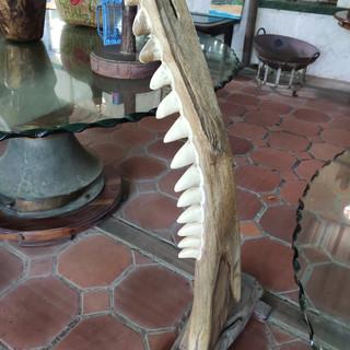 Decoracion de mndibula de tiburon Blanco
