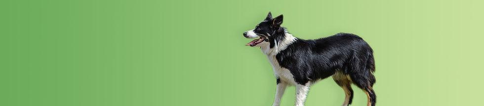 green-dog-strip.jpg