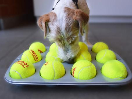 3 DIY Dog Treat Puzzles