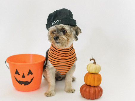 6 Must Read Halloween Safety Tips
