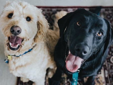 5 Tips For Taking Pet Photos From A Professional Photographer