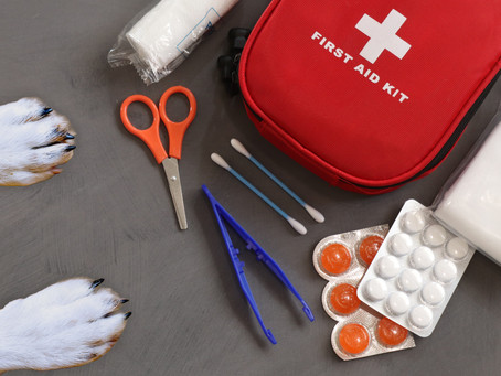 First Aid Kits For Your #1 Pal