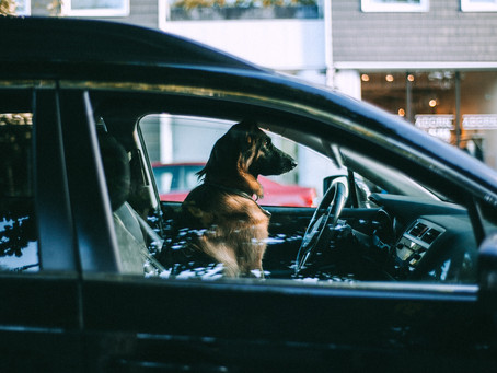 4 Reasons Why You Should Never Leave Your Dog In the Car