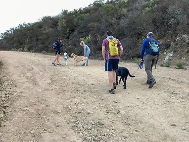 dog-hike-2.jpg