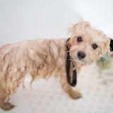 thpr-dog-bath.jpg