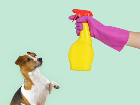 Are Your Cleaning Products Safe For Pets?