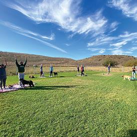 dog-yoga-3-insta.jpg