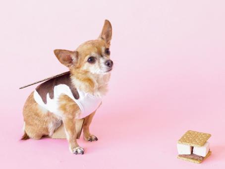 4 Easy DIY Dog Halloween Costumes