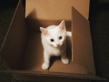 4 Reasons Why Cats Like Boxes