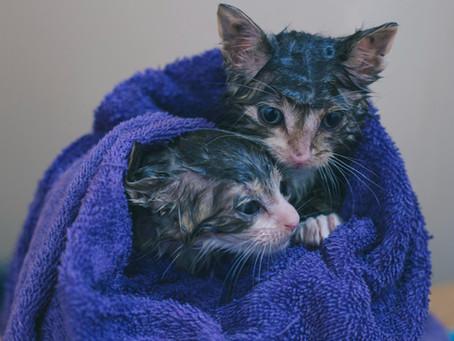 Should You Bathe Your Cat?