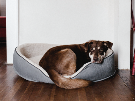 How To Help Your Dog Adjust to Your Return to Work