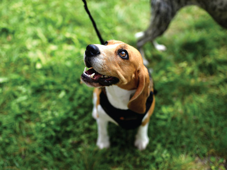 4 Reasons Why You Should Let Your Dog Sniff On Walks