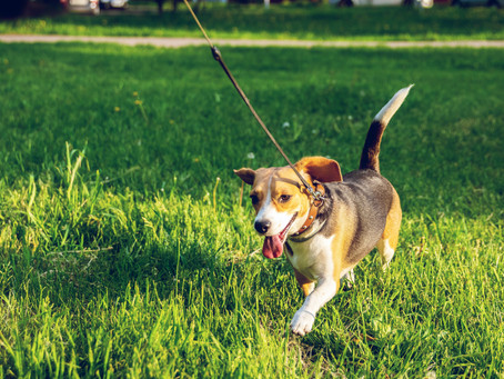 Puppy Training: The Road To Positive Behavior Practices