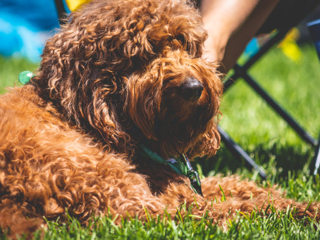 Tips & Food Safety for Dogs at Summer Gatherings