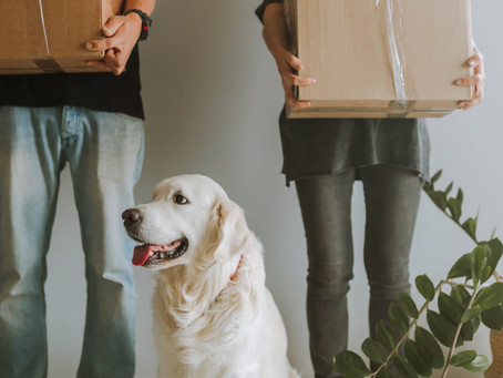 How To Help Your Dog When Moving To A New Home