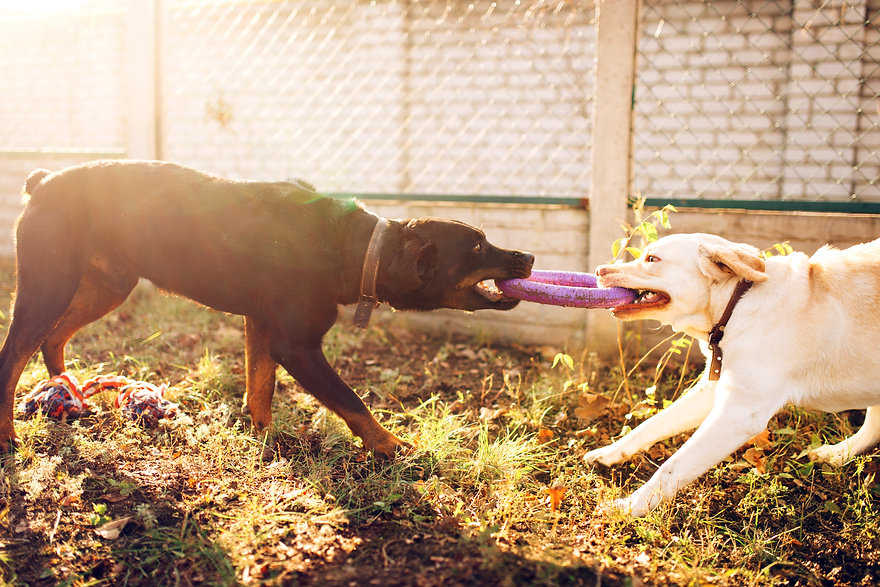 working-dogs-on-training-cynologist-part
