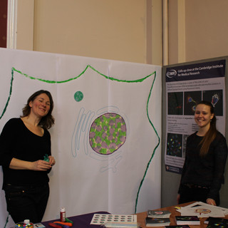 CIMR stand at the Cambridge Science Festival, March 2017