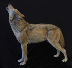 Wolf I Night Song, Life Size