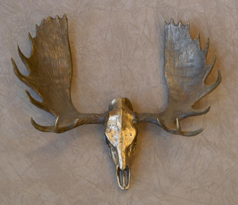 Moose Skull