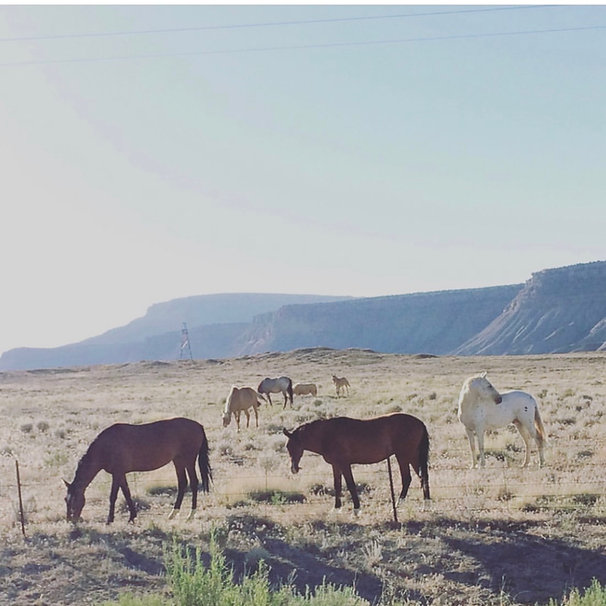 Pretty Horses.jpeg