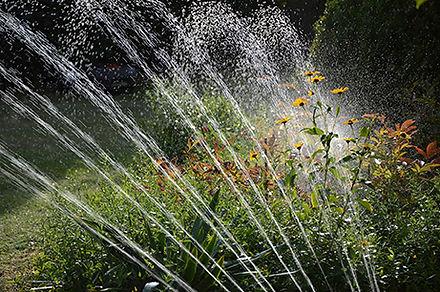 Bewässerung-Blumen.jpg