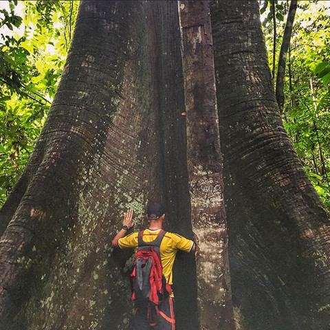 One of the many large Amazonian trees that protect Parign Hak