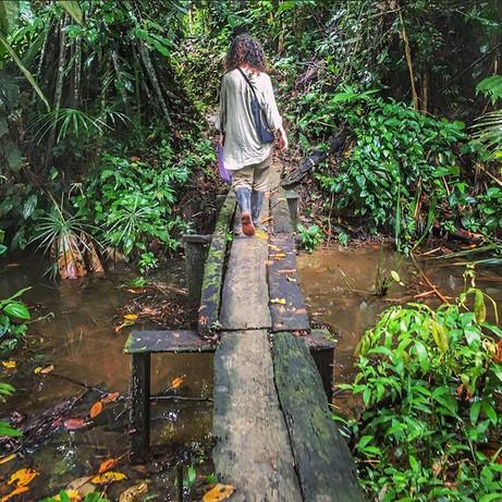 The path to the maloca